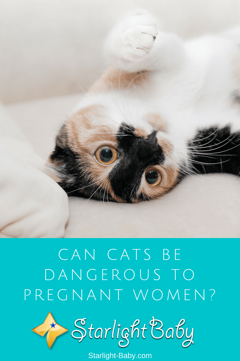 Can Cats Be Dangerous To Pregnant Women?