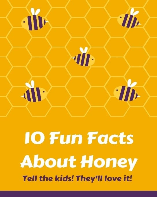 10 Fun Facts About Honey Tell The Kids They'll Love It